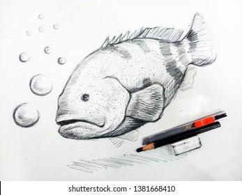Art - Drawing grouper fish