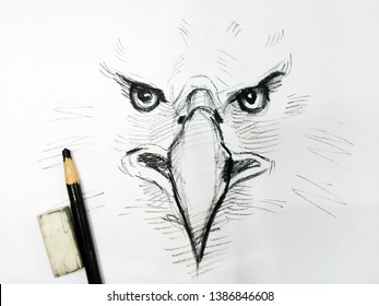 Art  Drawing sketch Hawk  Eagle