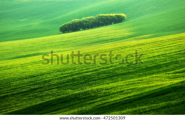 The art of light. The open green field. Trees middle latitudes field - Slovak Republic. Green waves.