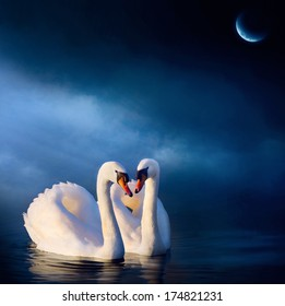 Art love couple Swan floating on the water at sunrise of the day