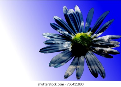 Art of Margerite daisy Flower  blossom