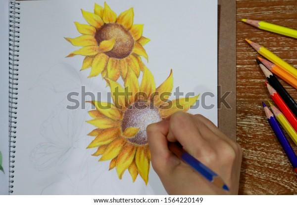 Art Nature Concept Hand Color Pencil Stock Photo Edit Now 1564220149