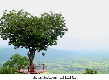 Art of the Nature, Natural Heart Shape Tree in Phitsanulok Province of Thailand