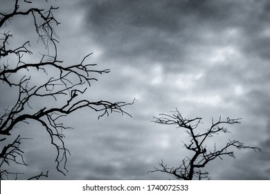 Art picture of dead tree with branches. Death, sad, lament, hopeless, and despair background. Drought of the world from the global warming crisis. Natural death. Black and white photo of dead tree.