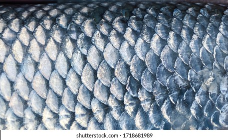 Art Real walleye Fish Scales Background