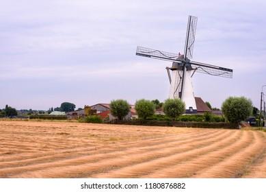 Artemeersmolen in Aalter. Field of flax with a white wind mill in countryside near Aalter, Tielt and Deinze in Flanders, Belgium.