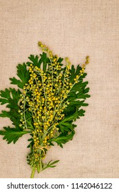 Artemisia absinthium ( absinthe, absinthium, absinthe wormwood, wormwood ) flowers and leaves on linen cloth napkin, close up