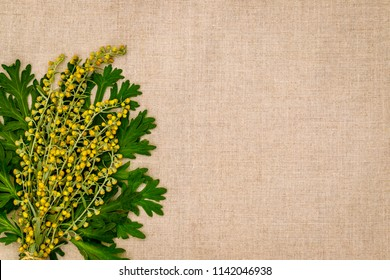 Artemisia absinthium ( absinthe, absinthium, absinthe wormwood, wormwood ) flowers and leaves on linen cloth napkin, close up with copy space