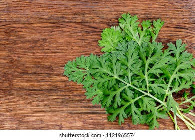 Artemisia absinthium ( absinthe, absinthium, absinthe wormwood, wormwood ) leaves on brown wooden background, copy space macro