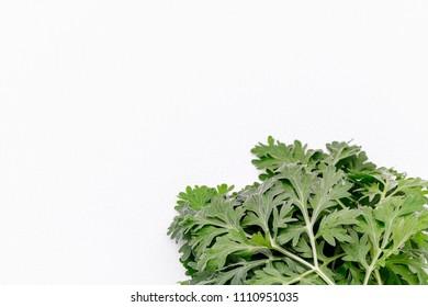 Artemisia absinthium ( absinthe, absinthium, absinthe wormwood, wormwood ) plant, close up on white bacground