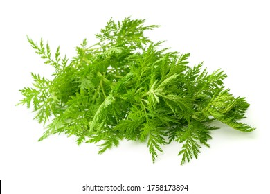 Artemisia annua plant isolated on white background