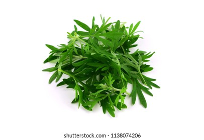 Artemisia Medicinal Herb Plant.  Pile of Leaves, stems and Twigs. Isolated on White Background.