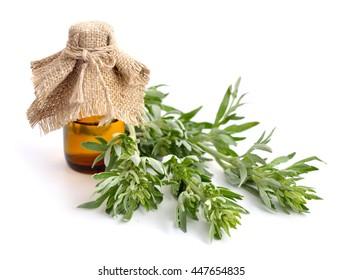 Artemisia, mugwort, wormwood, and sagebrush. Isolated.
