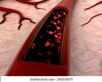Artery, artery shown with a cut out section, High quality rendering with original textures and global illumination, Contraction of blood vessels