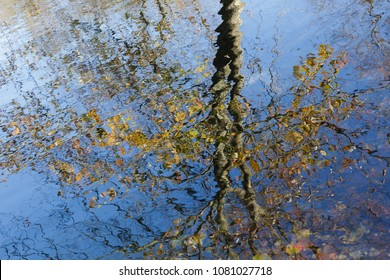 Artful reflection of Autumn tree in pond water