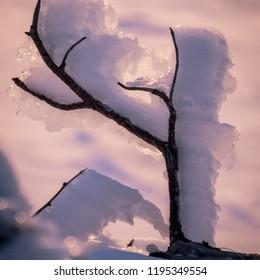 artic nature winter