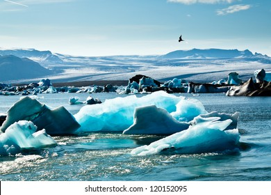Artic Tern over Jokulsarlon Glacier Lagoon, Iceland