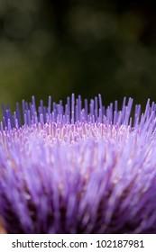 Artichoke Flower abstract