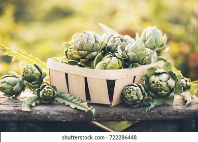 Artichokes in the box against the green of the garden. Vegetables for a healthy diet.