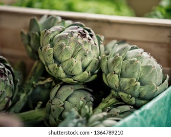 Artichokes at a local Weekly Market in Brittany France