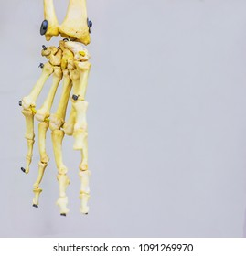 articulated carpal bones showing human hand anatomy in white background