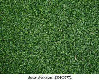 artifical turf texture background.