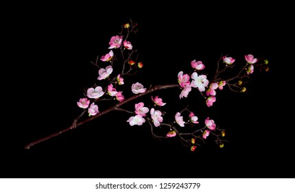 Artificial branch of cherry blossoms with pink flowers, isolated on black background