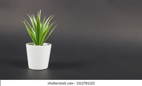 Artificial cactus plants or plastic or fake tree on black background.