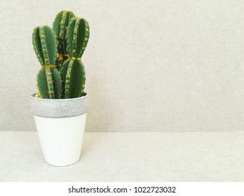 Artificial cactus in white pot. Faux plant. Contemporary home decor.