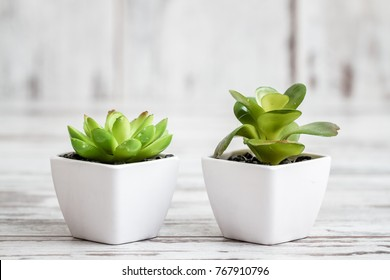 Artificial cactuses in white pots on white wooden background