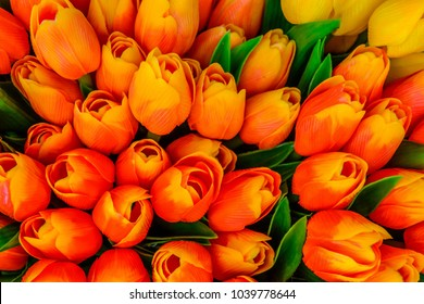"Artificial colorful tulips in orange, red, and yellow colors with green leaves - imported to Holland, became popular in paintings & festivals, creating 1st economic bubble, ""Tulip Mania"" (tulipomania)"