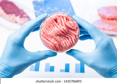Artificial cultured meat concept. Clean ground meat sample in lab scientist hands in Petri dish.