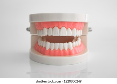 Artificial dental model on white background
