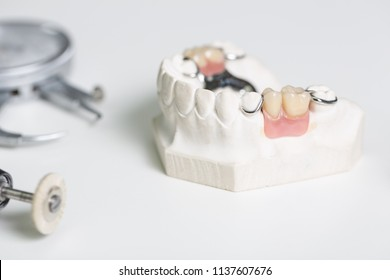artificial dentition and instruments in a dental laboratory