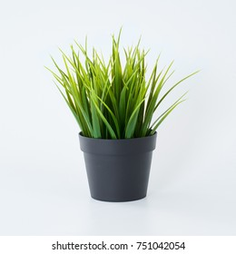 Artificial and fake green plants isolated on white background  .