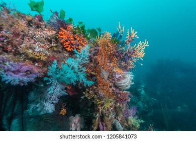 Artificial fish reef covered with colorful soft coral. It looks like flower garden. Owase, Mie, Japan