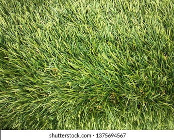 Artificial green grass made from plastic use to flooring in the park, inside the house, football stadium instread of the real grass because of less care of it