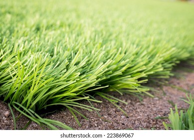 artificial green grass,sand ground