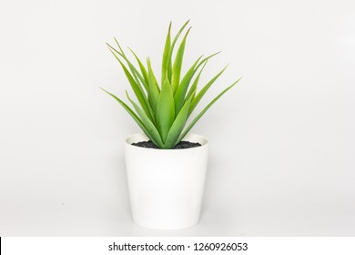 artificial green houseplant on white background