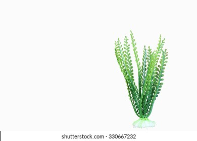artificial  green marine plant on white background