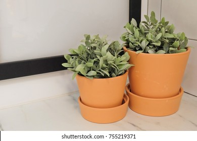Artificial Green Plants in Pottery Flower Pots for Home and Office Decoration without The Care.