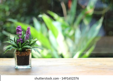 Artificial house plant in the pot with outside on windows view