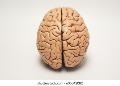 Artificial human brain model