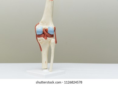 Artificial human knee joint model in medical office