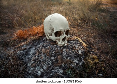 Artificial human skull on a gray stone.