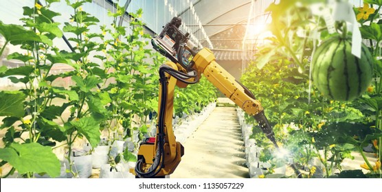 Artificial intelligence. Pollinate of fruits and vegetables with robot. Detection spray chemical. Leaf analysis and oliar fertilization. Agriculture farming technology concept.
