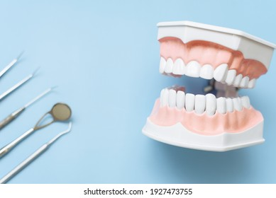 Artificial jaw and dental mirror, tweezers and probe on a blue background