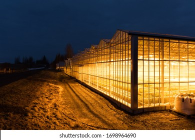 Artificial light greenhouse in Iceland