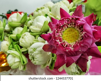 Artificial Lotus Flower Images Stock Photos Vectors Shutterstock
