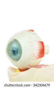 Artificial model of fhuman eye isolated on white background